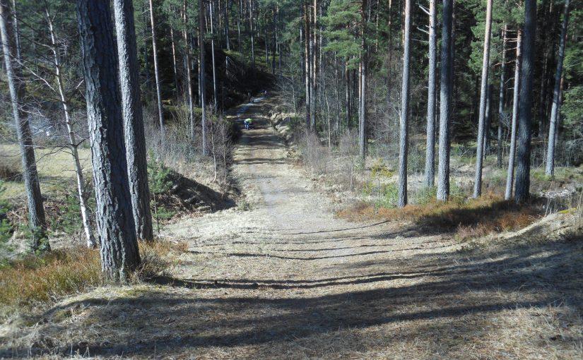 Vårdag i skogen