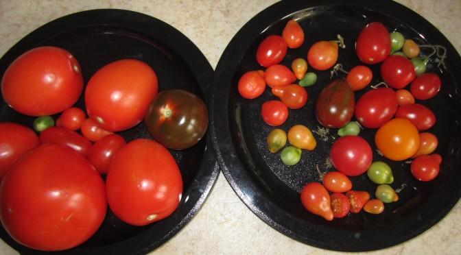 Vi provsmakar veckans grönsak!