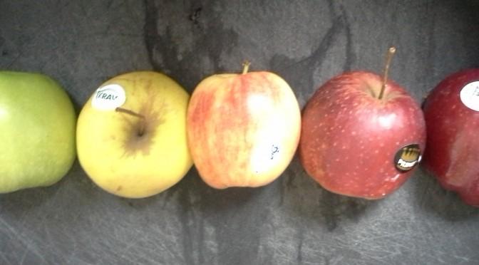 Äppelprovning