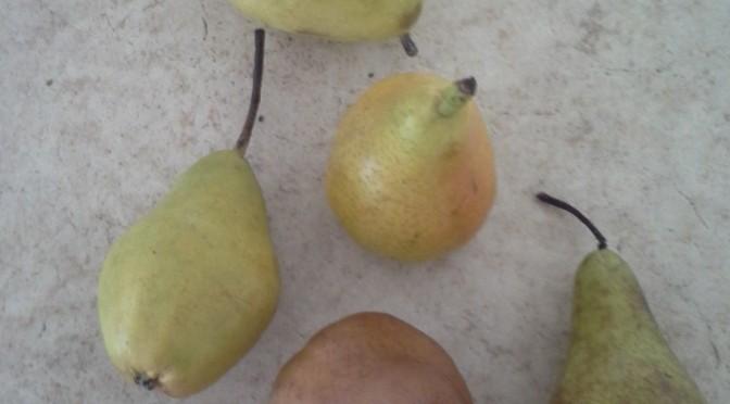 Veckans frukt Päron