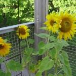 Glada solar