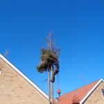 Trädfällning (1)