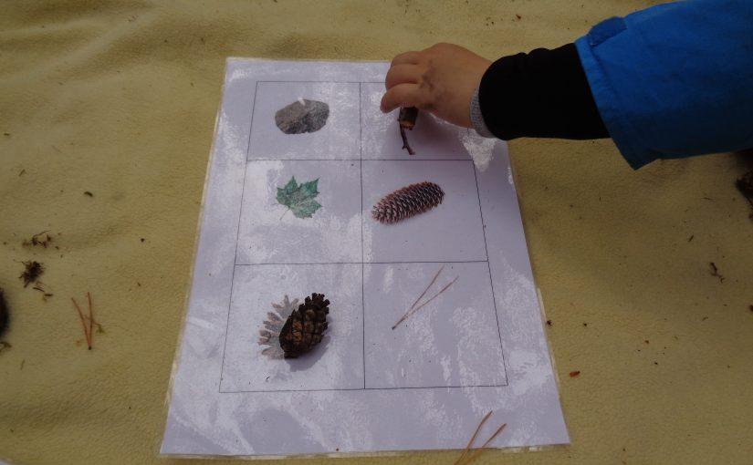 Fokus på matematik i skogen.
