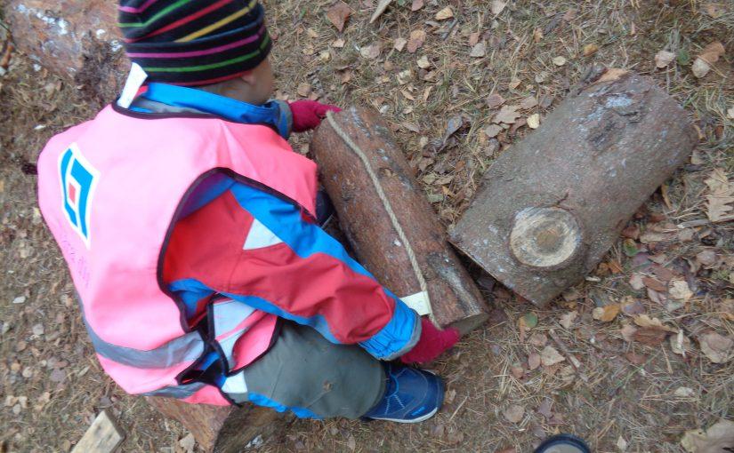 Matematikuppdragen fortsätter i skogen