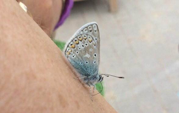 Fjäril vingad syns på förskolegården