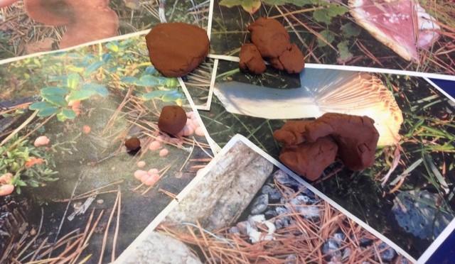 Leran blev till svampar!