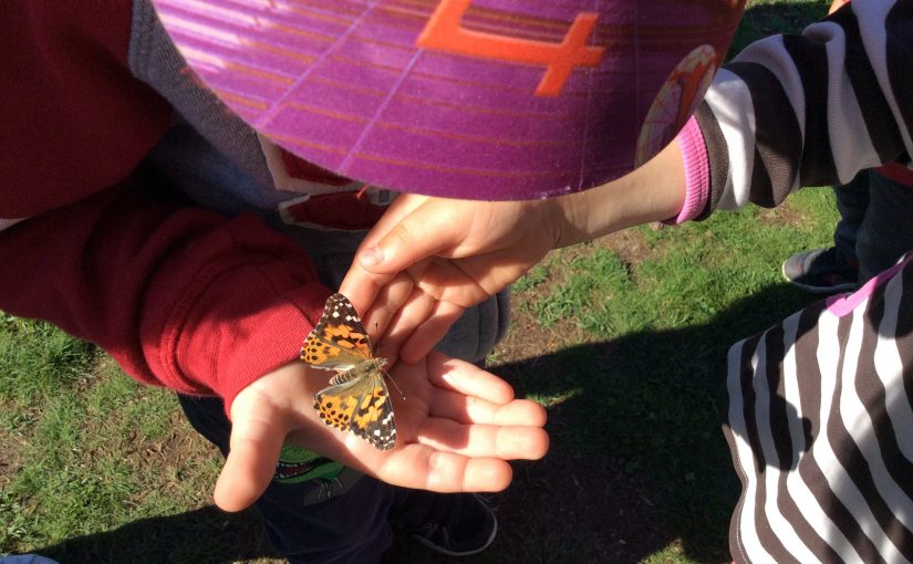 Örnarna släpper fjärilarna fria