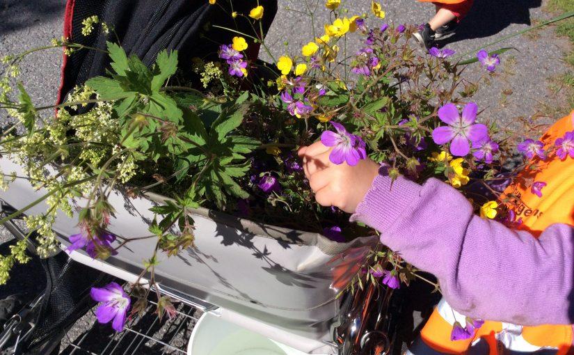 Hela famnen full med blommor