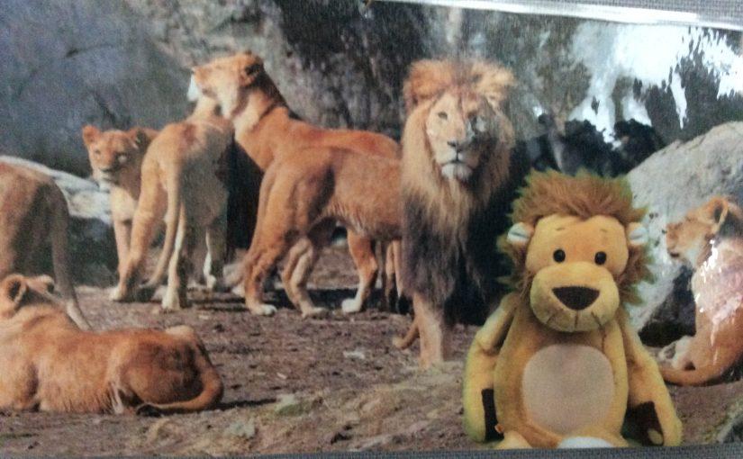 Lejonen har fått ett vykort!
