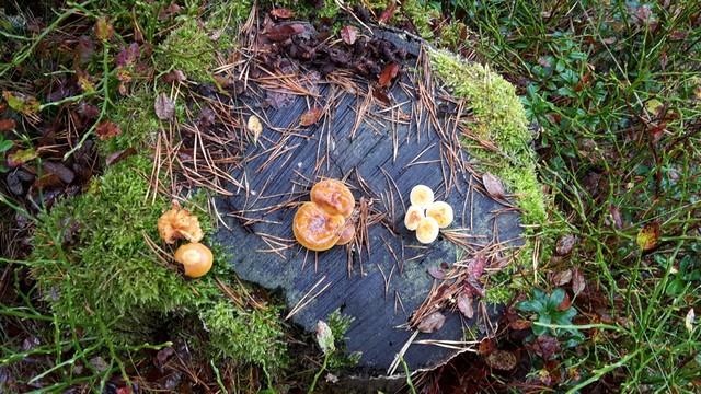 Blåa gänget i skogen