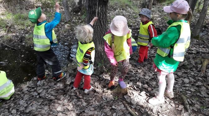 Vi letar efter grodyngel