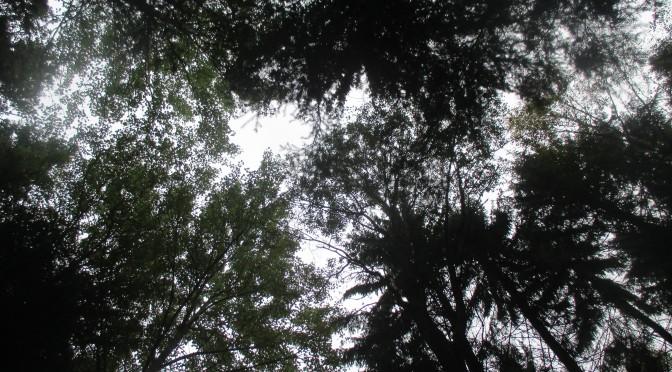 Skog och bak