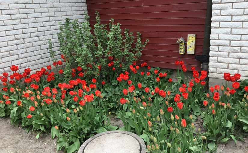 Det växer på Oppånergården