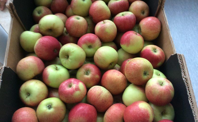 Äppel, päppel……….