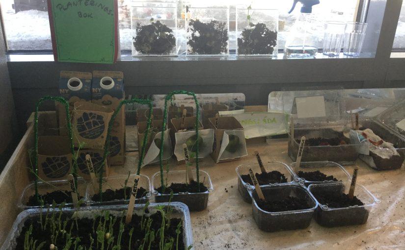 Det växer på Plejaderna!