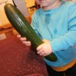 Dagens grönsak är gurka! Nu ska vi undersöka gurkan. vi börjar med att känna hur den känns.  - Oj, gurka kall.