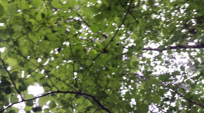 Vad hittar vi i skogen?