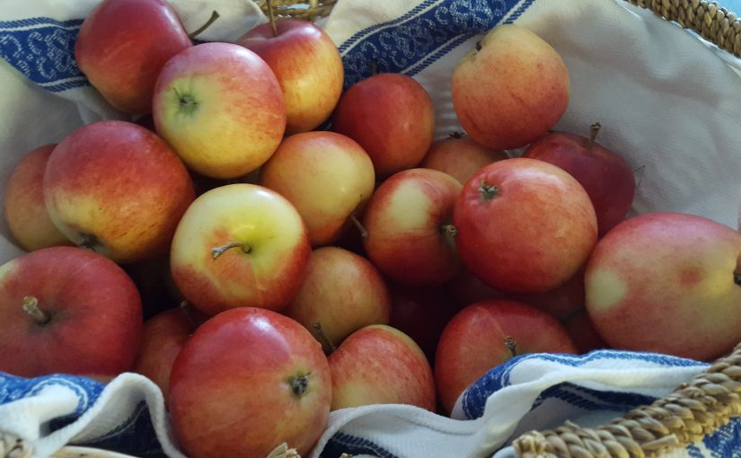 Vi tackar för alla äpplen!
