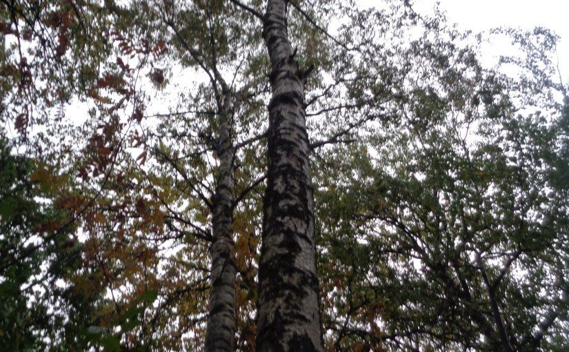 – Vem har skrivit på trädet ?