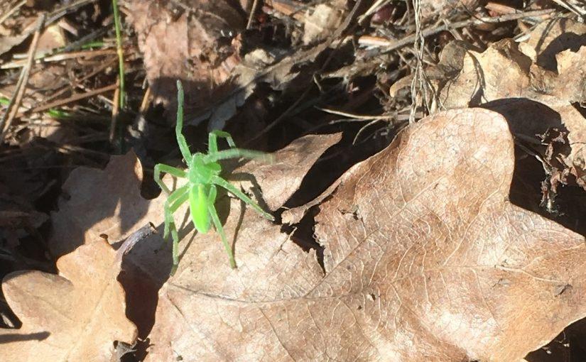 En grön liten krabat!