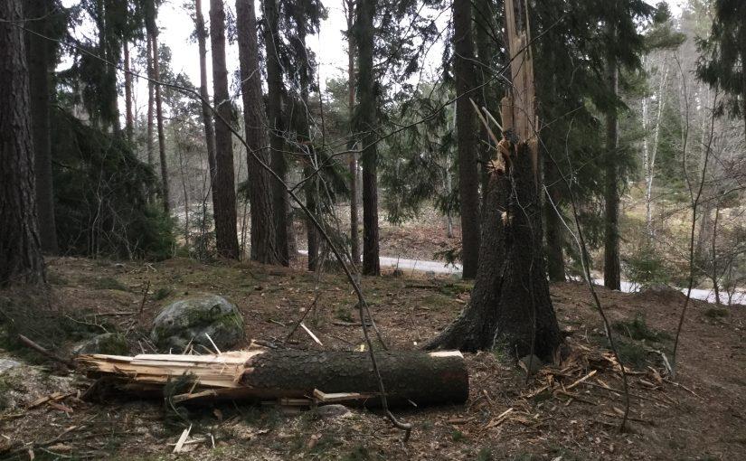 Vi städar skogen